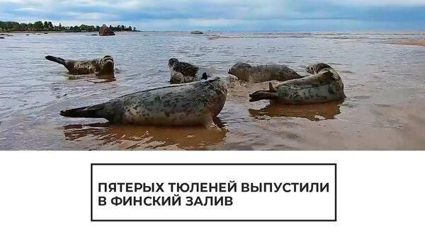 Пятерых тюленей выпустили в Финский залив - Sputnik Латвия