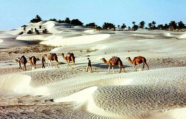 Пустыня в Тунисе - Sputnik Латвия