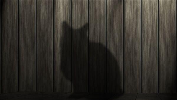 Тень кота - Sputnik Латвия