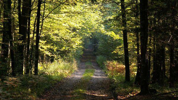 Леса в Беловеже, Польша - Sputnik Latvija