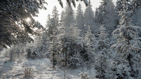 Зимний пейзаж - Sputnik Латвия