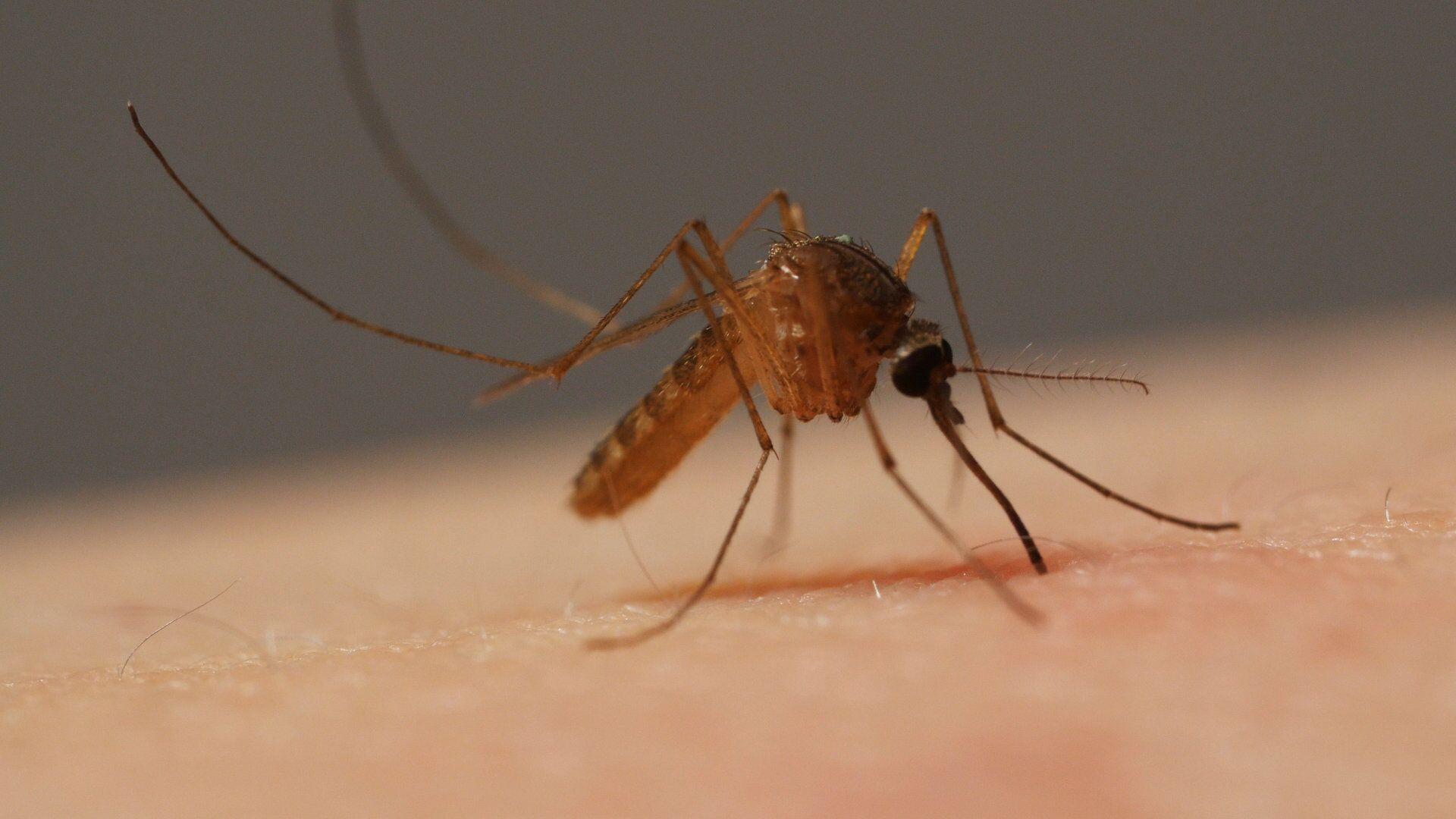 Комар впивается в кожу человека. - Sputnik Latvija, 1920, 23.05.2021