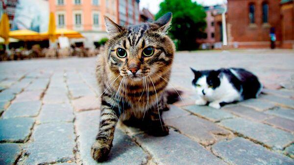 Официальные рижские коты - Кузя и Мурис - Sputnik Latvija