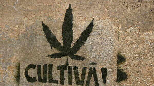 Штамп марихуаны на стене - Sputnik Латвия