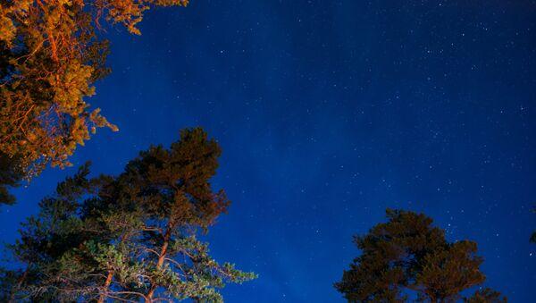 Звездное небо и сосны - Sputnik Latvija