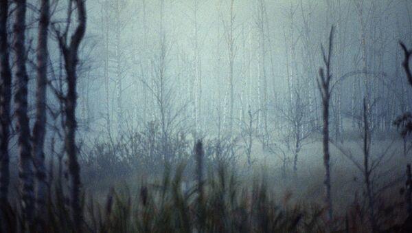 Туман в лесу - Sputnik Латвия