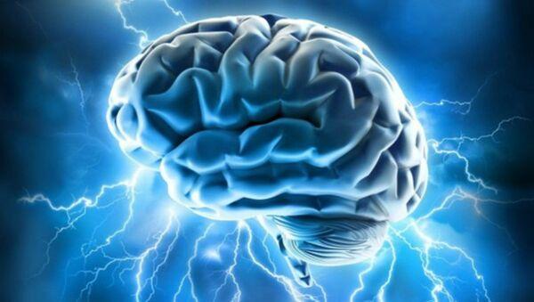 Smadzenes. Foto no arhīva - Sputnik Latvija