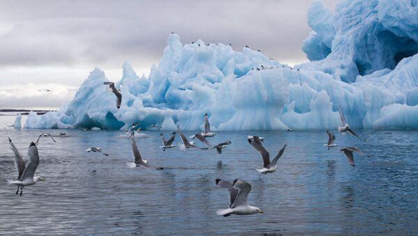 Aisbergs Tihaja līcī - Sputnik Latvija