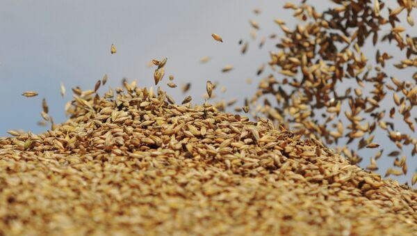 Сбор урожая на сельхозпредприятии Пульс-Агро - Sputnik Латвия