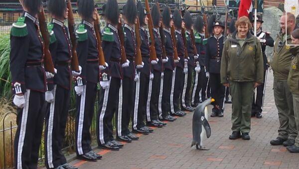 Пингвин по кличке Нильс Улаф III стал генералом Королевской гвардии Норвегии - Sputnik Латвия