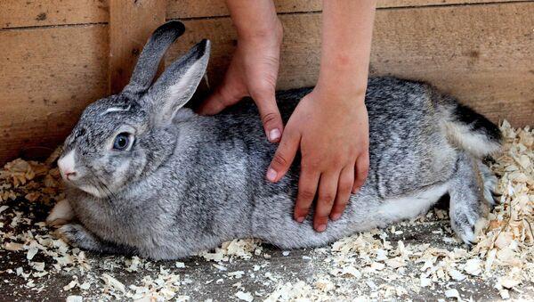 Кролик - Sputnik Латвия