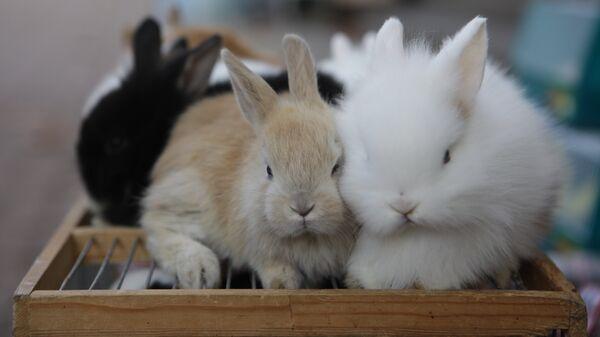 Кролики - Sputnik Латвия