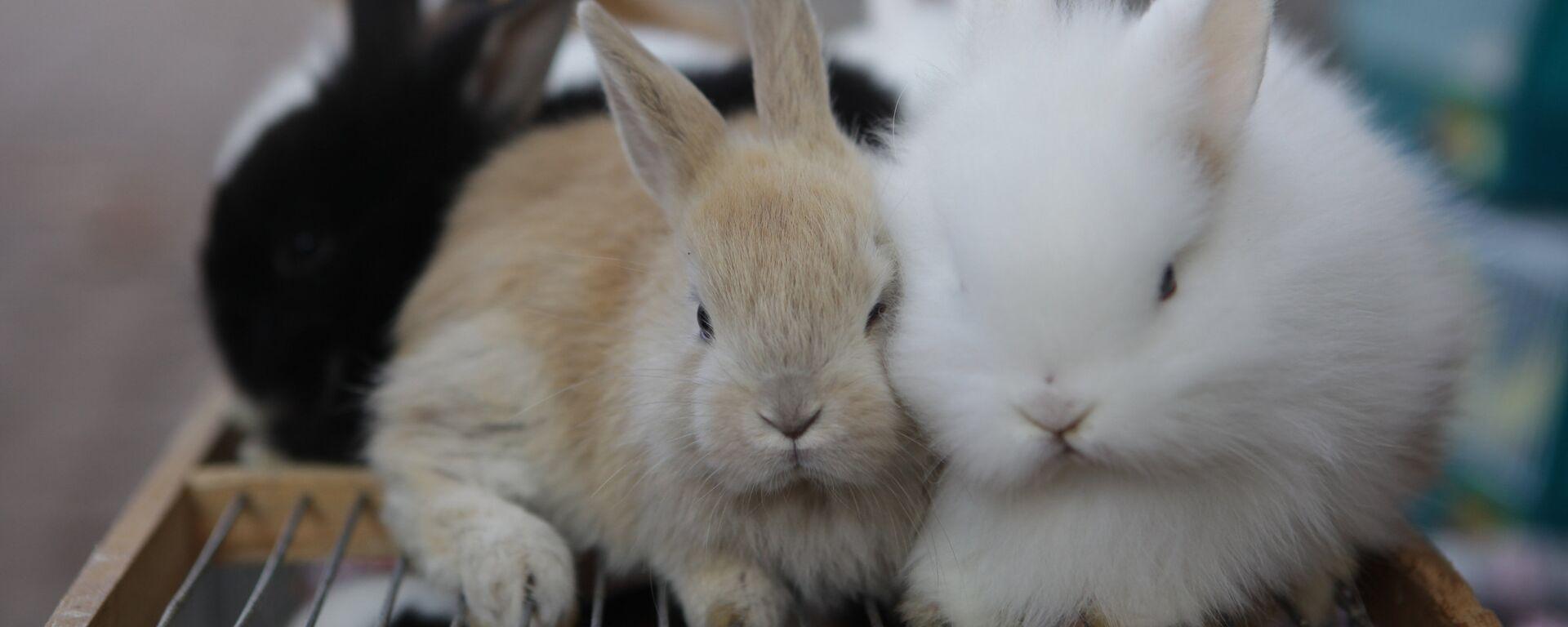 Кролики - Sputnik Латвия, 1920, 04.07.2021