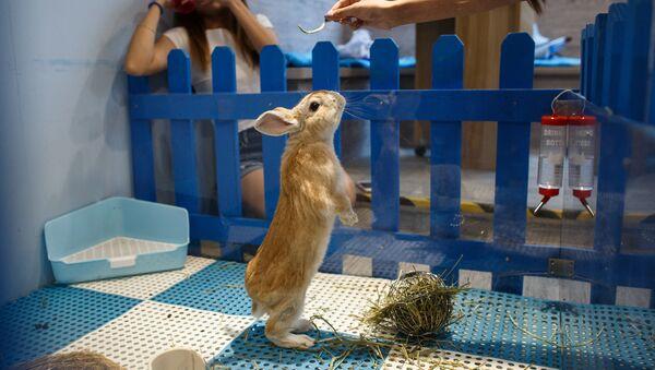 Кафе Rabbitland в Гонконге - Sputnik Латвия