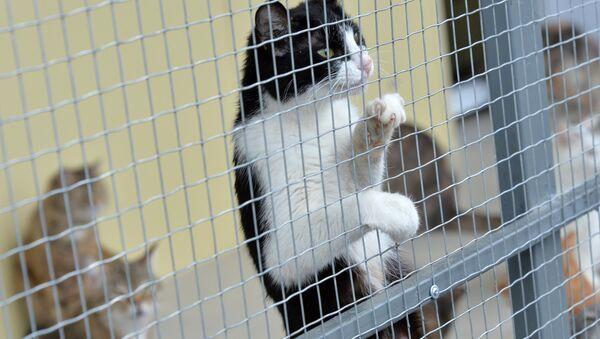 Приют для бездомных животных. - Sputnik Латвия