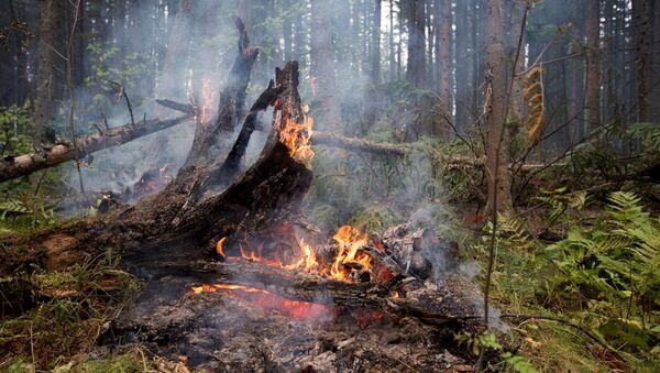 Лесные пожары в Бурятии - Sputnik Latvija