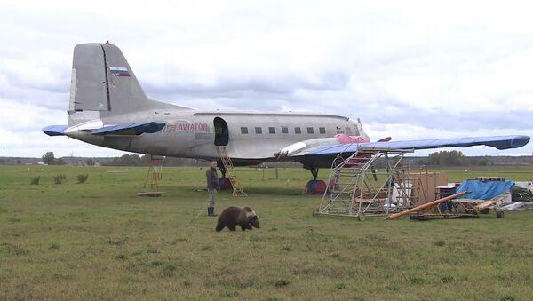 Медвежонок Мансур поселился на аэродроме под Тверью и подружился с лайкой - Sputnik Латвия