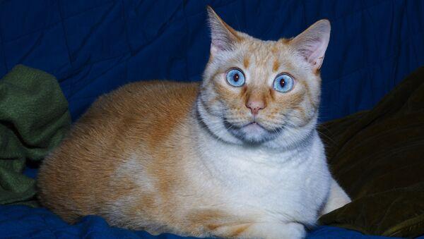 Удивленный кот - Sputnik Латвия
