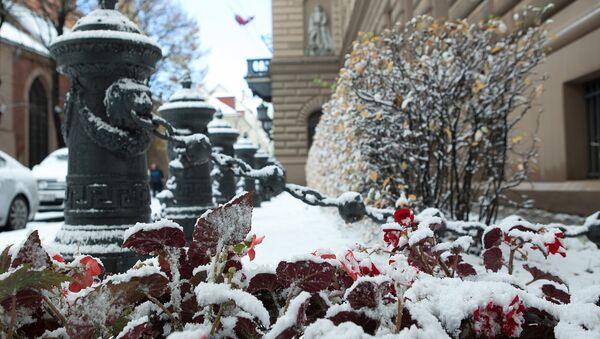 Клумба с цветами под снегом у здания Сейма Латвии - Sputnik Латвия