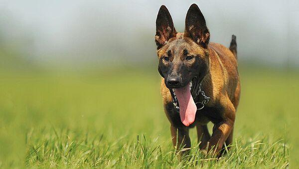 Собака без намордника - Sputnik Латвия