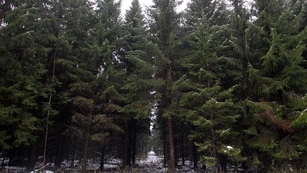 Руководство Рижской думы выбирает главные елки столицы - Sputnik Латвия