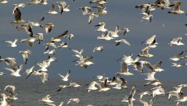 Чайки на побережье - Sputnik Латвия
