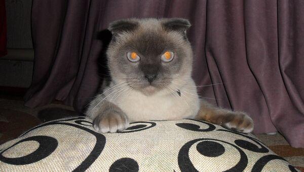 Политик-кот Барсик из Барнаула - Sputnik Латвия