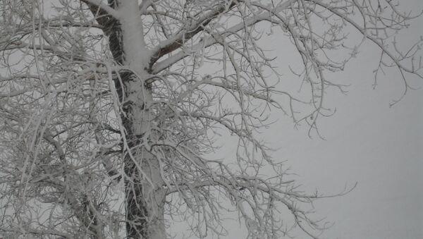 Nākamnedēļ iespējami līdz šim stiprākie sniegputeņi un lielākais sals šoziem - Sputnik Latvija
