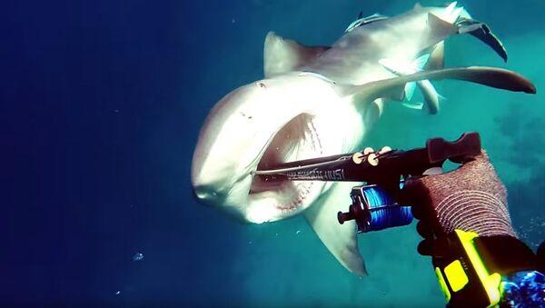 Схватка между дайвером и акулой - Sputnik Латвия