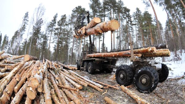 Рубка леса - Sputnik Латвия