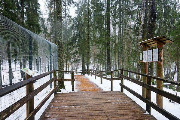 Parkā iekārtoti ērti koka celiņi - Sputnik Latvija