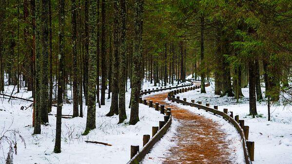 Ērts celiņš vijas starp kokiem un pagaist aiz pagrieziena - Sputnik Latvija