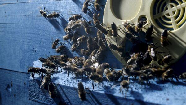 Улей с пчелами - Sputnik Латвия