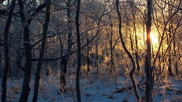 Закатное солнце в зимнем лесу - Sputnik Latvija