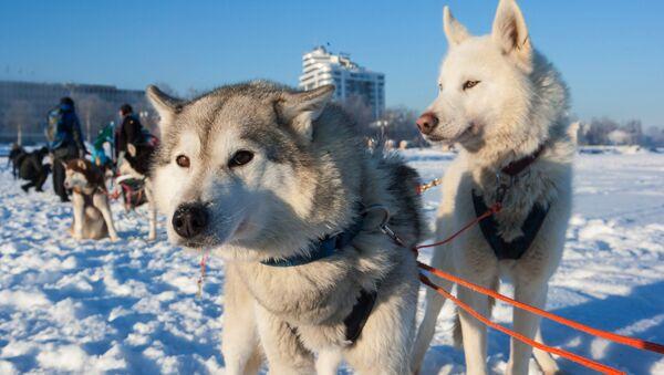 Экспедиция на собачьих упряжках Великая Андома. Тайна трех океанов в Карелии - Sputnik Латвия