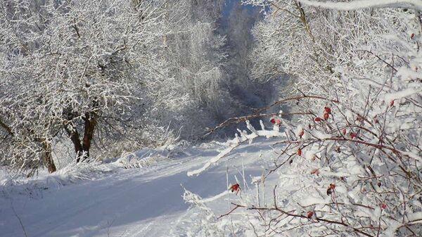 Зимняя дорога и деревья в снегу - Sputnik Латвия