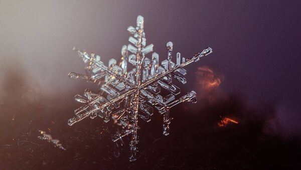Макросъемка снежинки - Sputnik Латвия