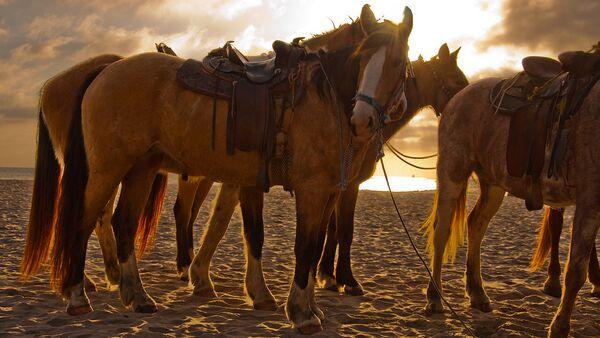 Кони на пляже - Sputnik Latvija