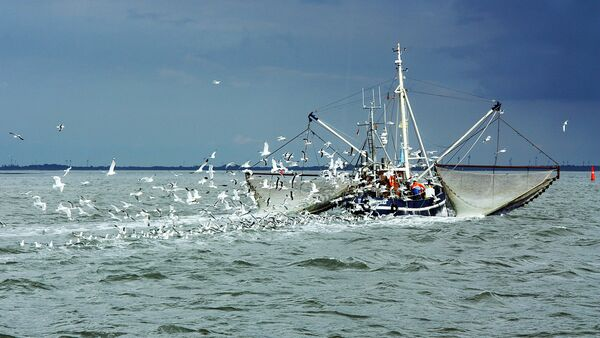 Рыболовное судно и чайки - Sputnik Latvija
