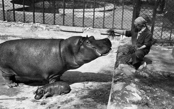 Московский зоопарк, 1944 год - Sputnik Латвия