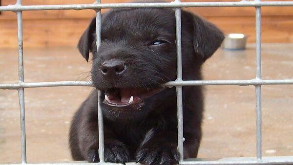 Собака - Sputnik Латвия