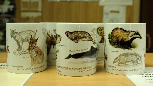 Эксклюзивная сувенирная серия просветительских кружек Калининградского зоопарка - Sputnik Латвия