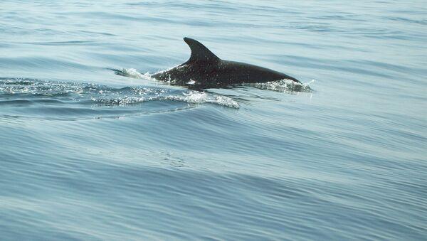 Дельфин - Sputnik Латвия