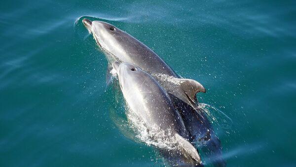 Дельфины - Sputnik Латвия