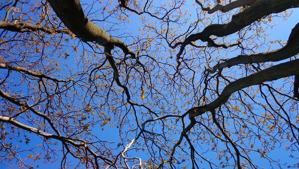 Деревья на фоне голубого неба весной - Sputnik Латвия