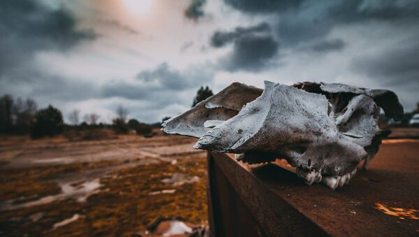 Чернобыль - Sputnik Latvija