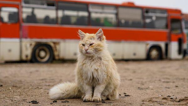 Посетителей киногородка встречает кот - Sputnik Latvija