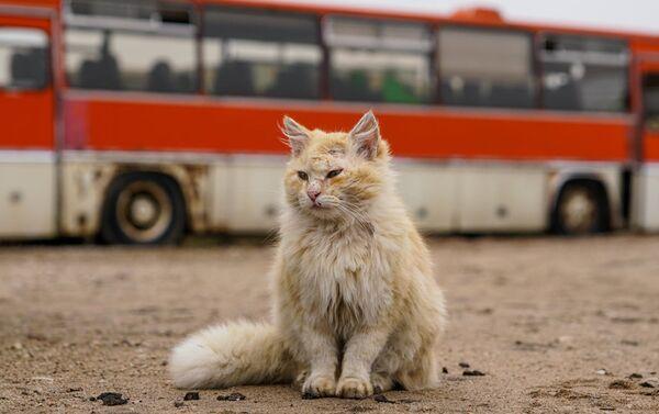 Посетителей киногородка встречает кот - Sputnik Латвия