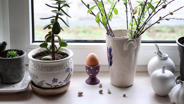 Яйца - Sputnik Латвия
