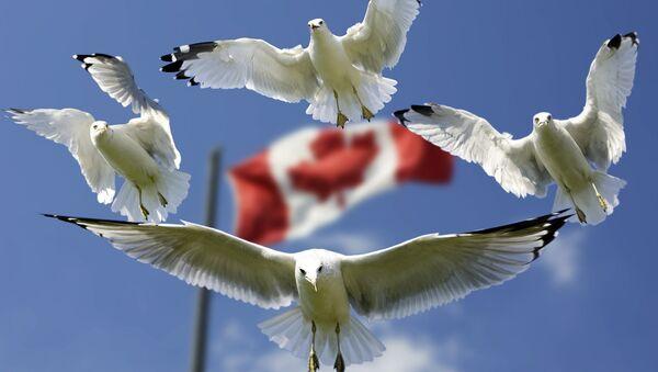 Флаг Канады - Sputnik Латвия
